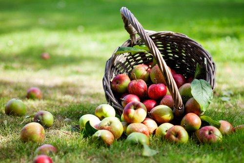 10 Vegetarian Apple Recipes