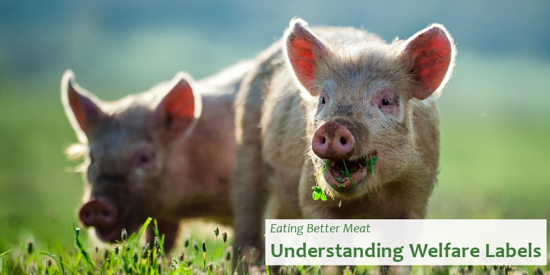 Eating Better Meat - Understanding Welfare Labels