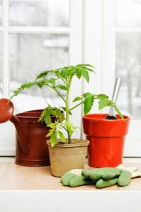 indoors gardening
