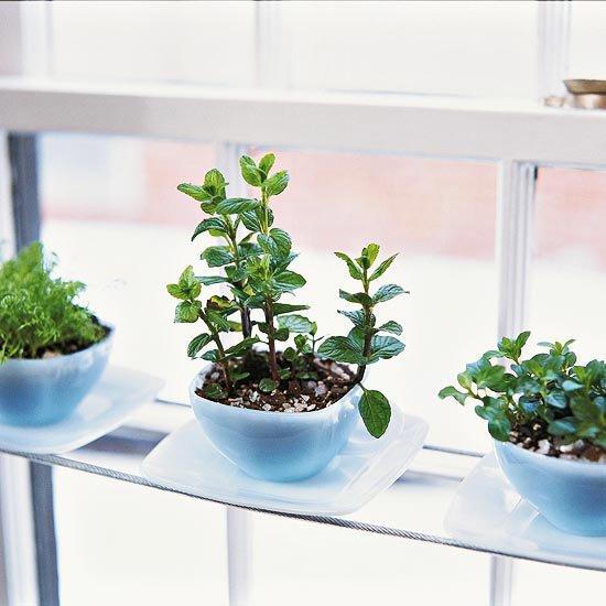 Herb Garden in Tea Cups by Better Homes & Gardens