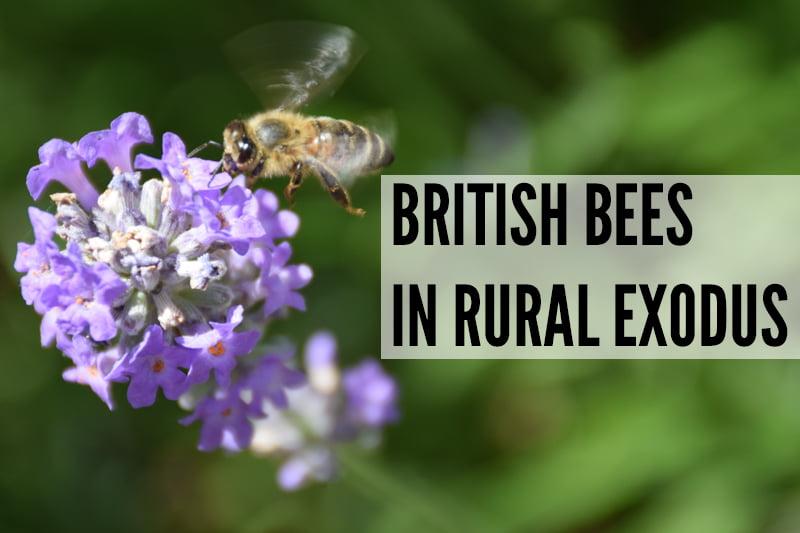 British Bees in Rural Exodus v800