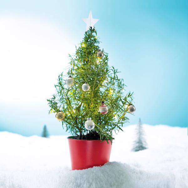 Waitrose Edible Christmas Tree - Waitrose Vegan & Vegetarian Festive Food