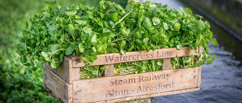 Watercress - A British Superfood To (Re)discover